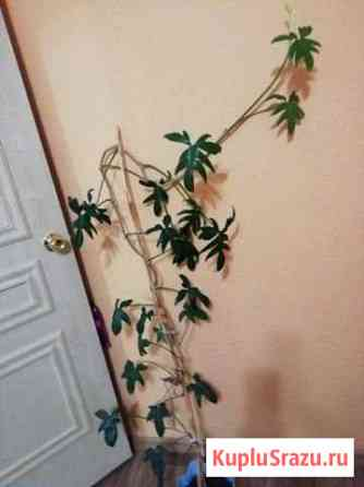 Цветок Петропавловск-Камчатский