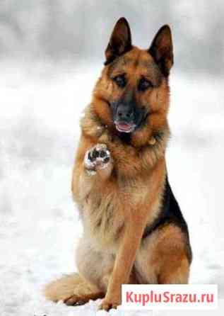 Дрессировка собак Симферополь
