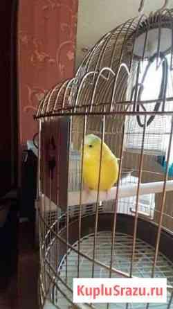 Папугай с клеткой Нальчик