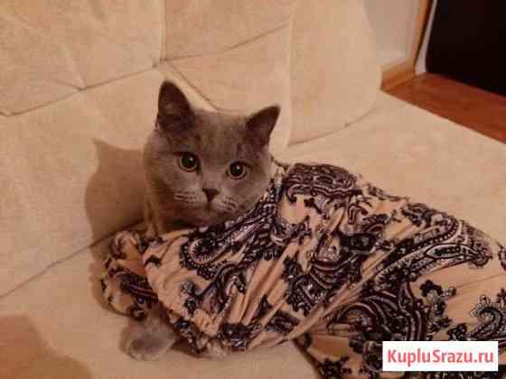 Продам кота Обнинск