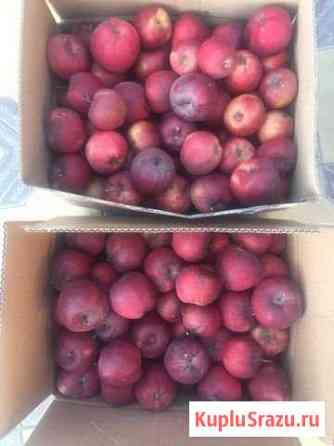 Яблоки домашние, без всякой химии Учкекен