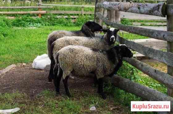 Мясо баранины кроликов деревенские охлажденное Киров