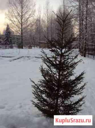 Елка новогодняя Сыктывкар