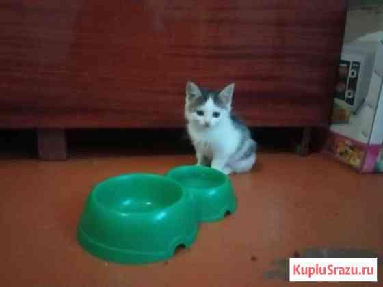 Котята в добрые руки Бердск