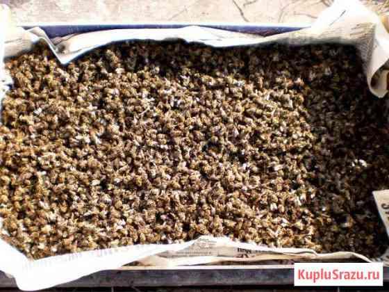 Пчелиный мор Кромы