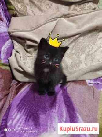 Отдадим котенка Кузнецк