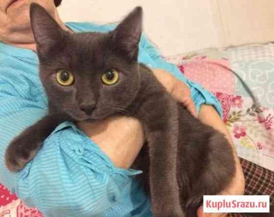 Необычного окраса плюшевый кастрированный кот Кемерово
