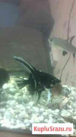 Рыбки аквариумные Вахруши