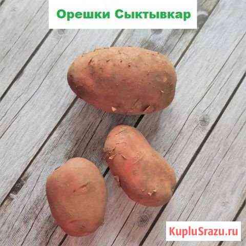 Картофель Сыктывкар