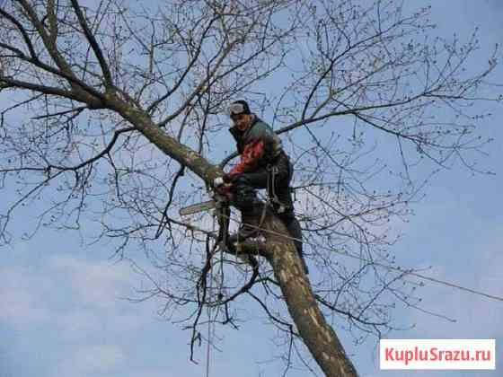 Спил деревьев, санитарная обрезка, вырубка кустов Кострома