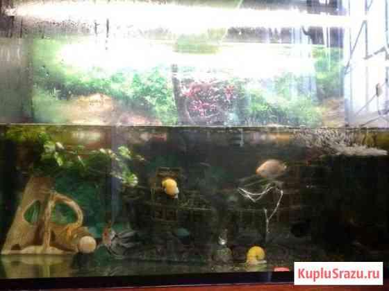 Аквариум 240л с оборудованием и рыбками Алупка