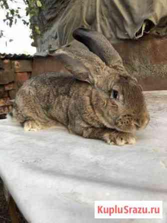 Продам кроликов Золотухино