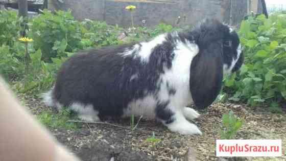 Кролики бараны и мясо кролика Саранск
