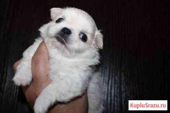 Собака Псков