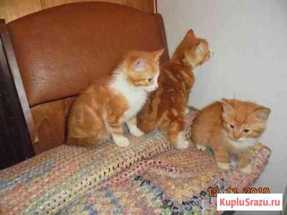Котята от домашней кошки Себеж