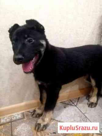 Собака Смоленск