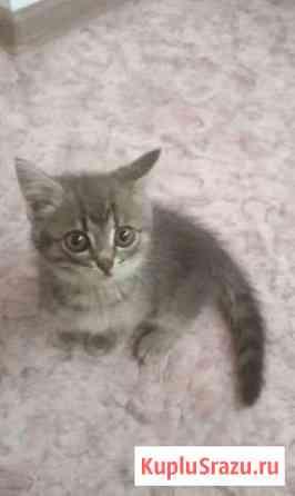 Кошечка Феодосия