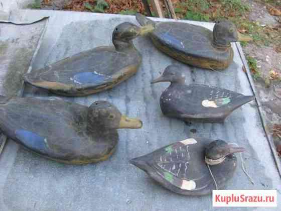 Подсадные резиновые утки (18 шт.) Симферополь
