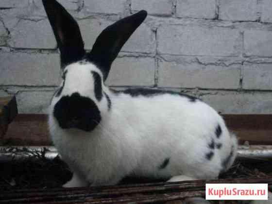 Кролики для разведения- Строкачи.и не только Добринка