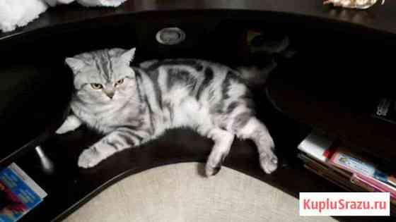 Кот на вязку Волжск