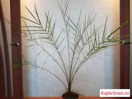 Продам комнатные растения Мурманск