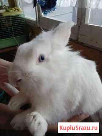 Декоротивный кролик Ессентуки