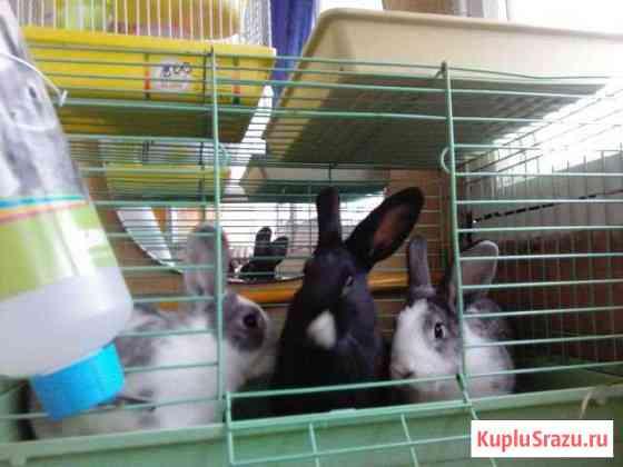 Декоротивные кролики Ессентуки