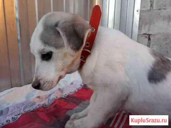 Очаровательный щенок ищет дом Тамбов