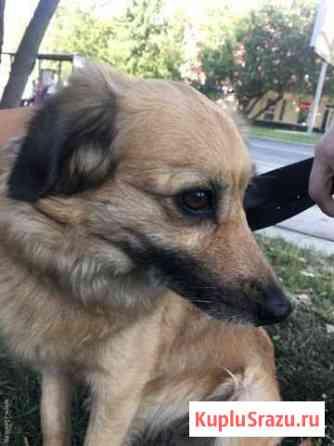 Пропала собака Кирсанов