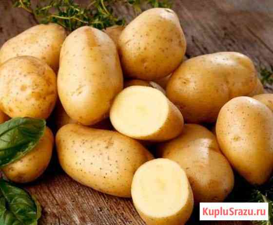 Картофель Кимры