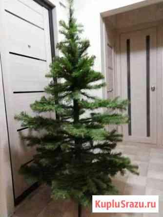 Ёлка новогодняя Мончегорск