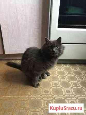 Кошка ищет дом Мурмаши