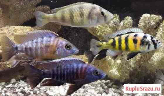 Аквариумные рыбки Кировск