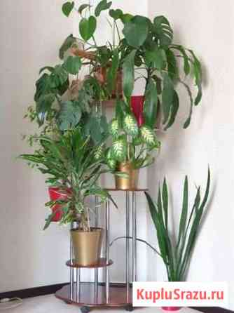 Подставка под цветы Рязань