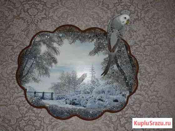 Попугай Волнистый Сызрань