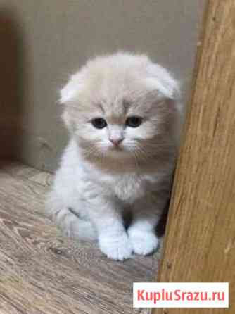 Кошка Балаково