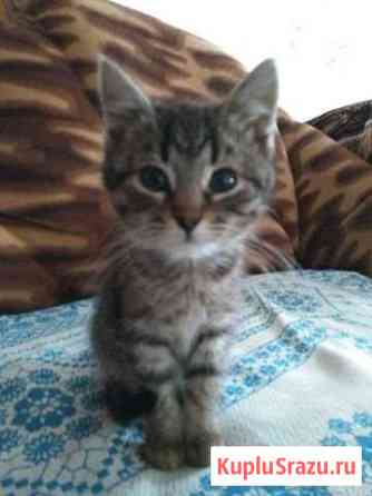 Отдам в добрые руки котят. Девочки. 2 месяца Мценск
