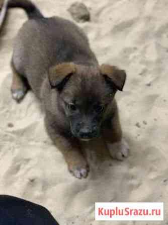 Девочка от маленькой собаки Кузнецк