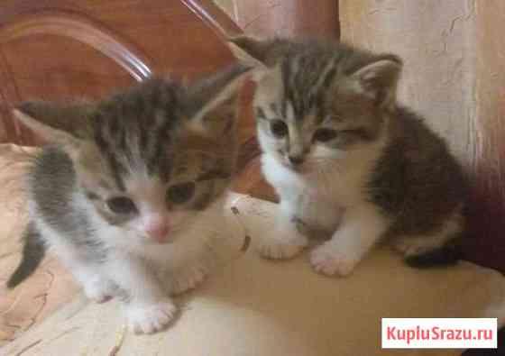 Отда котят в добрые руки две кошечки и один кот.ку Башмаково