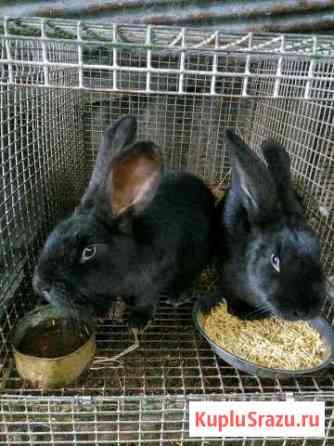 Кролики Ессентукская