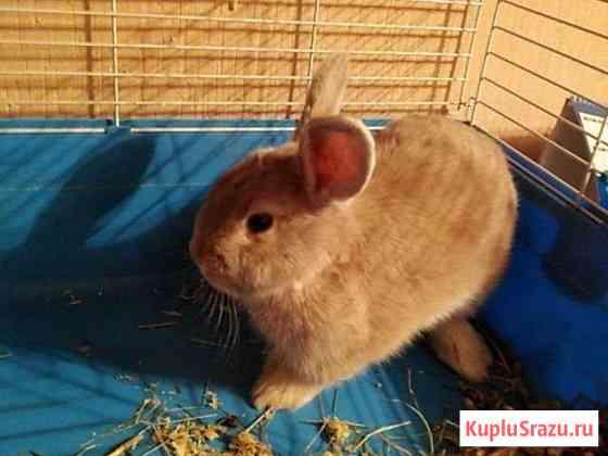 Кролик Саратов