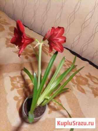 Продам комнатные цветы Бологое