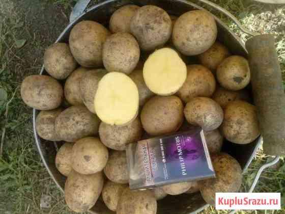 Картофель Донской