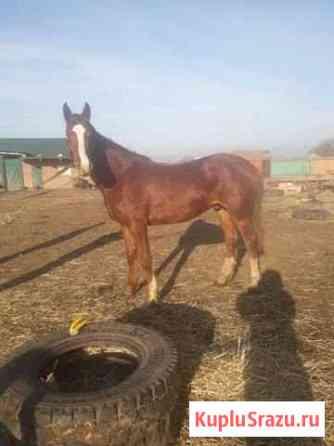 Лошадь Ипатово