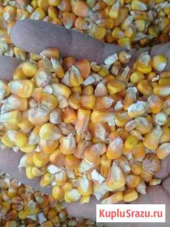 Кукуруза в зерне Левокумское
