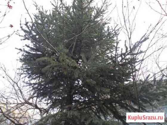 Новогодняя елка Горячеводский