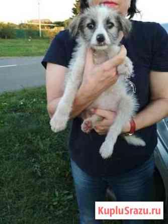 Симпатулька щенок девочка(стерилизуем) Тамбов