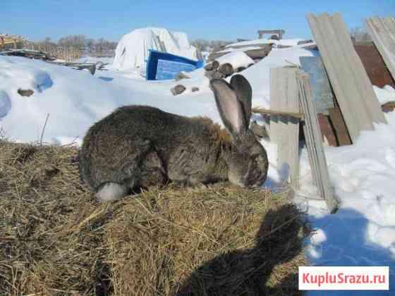 Кролики разных пород Рассказово
