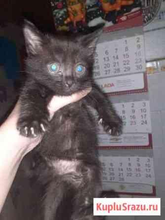 Котята в добрые руки Торжок