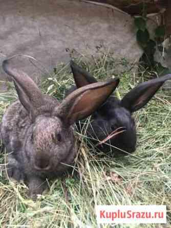 Кролики Редкино